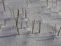snow-w03.JPG