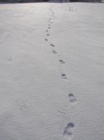 snow-w04.JPG