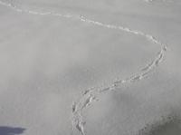 snow-w09.JPG
